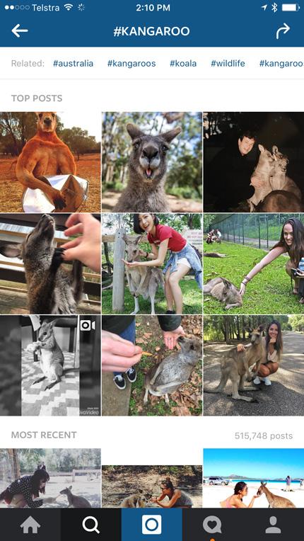 kangaroohashtag